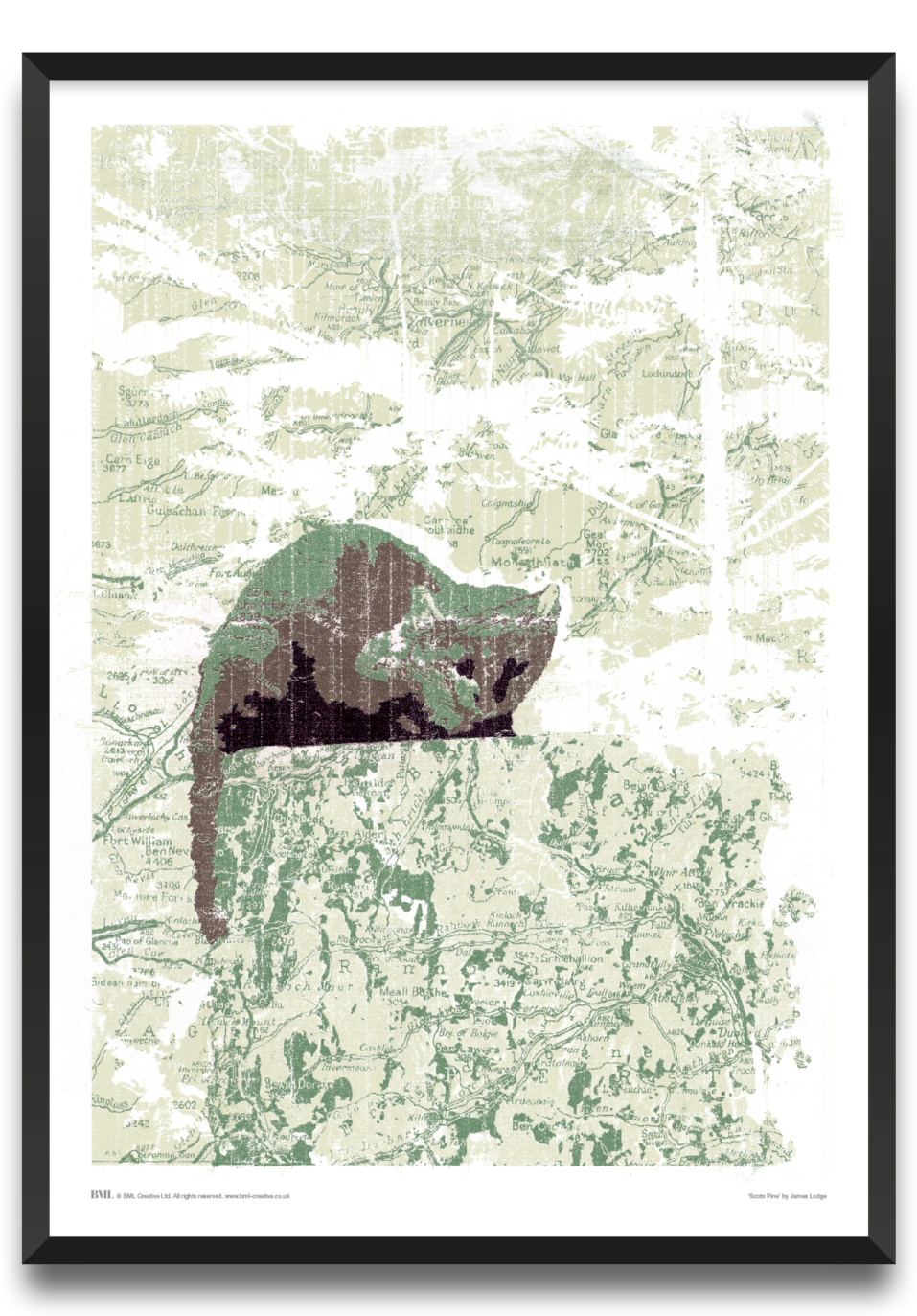 Scots Pine, animals art print by James Lodge, Prints for Charity